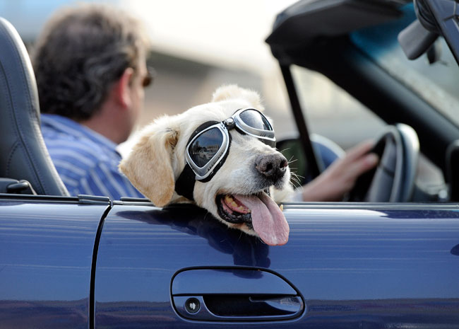 Best Dog Travel Tips,goggles,convertible,sports car