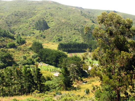 Name:  Green gulch farm.jpg Views: 307 Size:  102.0 KB
