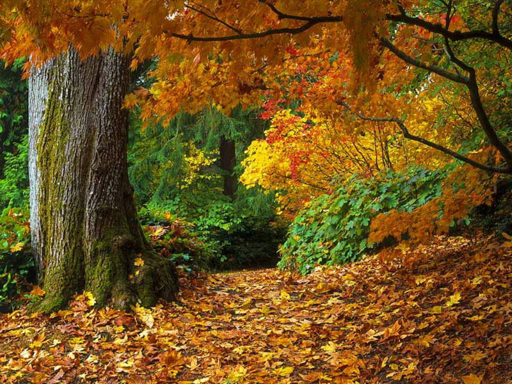 Name:  Autumn_Woods.jpg Views: 615 Size:  252.0 KB